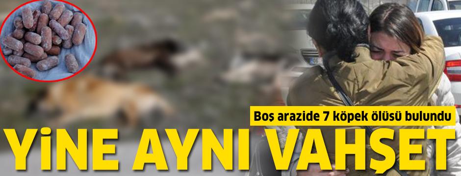 Ankara'da yine aynı vahşet: Köpeklere bu kez Çankaya'da...