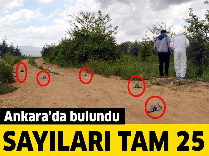 Ankara'da telef olmuş 25 çinçilla bulundu