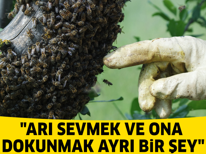 Arıların kovan içindeki yaşantısını öğrenmek için geliyorlar