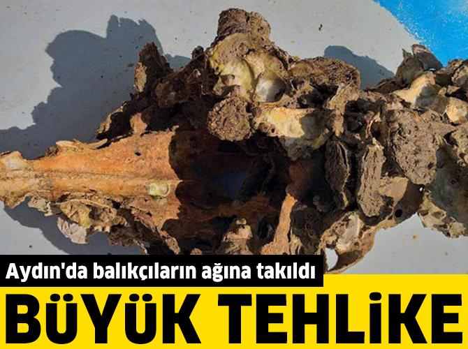 Aydın'da balıkçıların ağına takıldı: Büyük tehlike