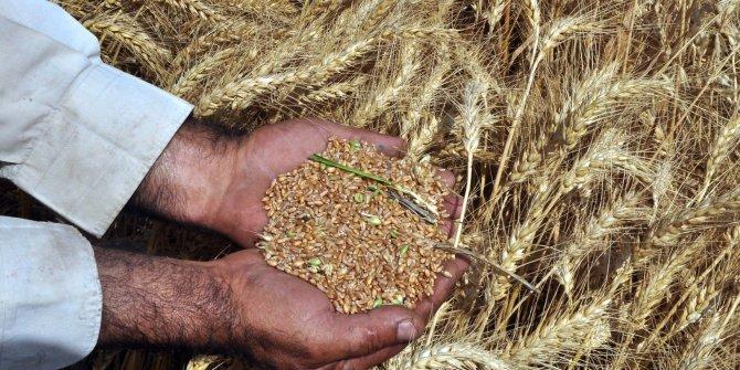 Türkiye tarım alanlarının yüzde 8,3'ünü kaybetti