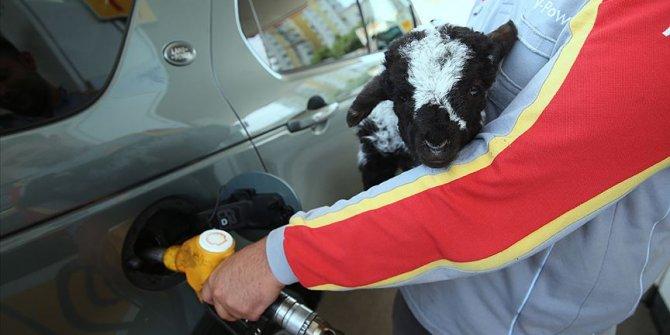 'Merinos' benzin istasyonunun maskotu oldu