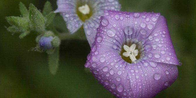 Çiğ taneleriyle parlayan çiçekler