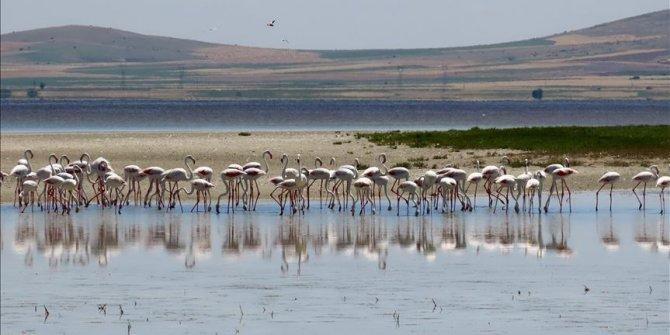Seyfe Gölü'nde kuş yoğunluğu