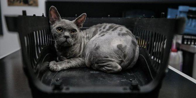 Tedavi ettiği sokak kedilerine sıcak yuva arıyor