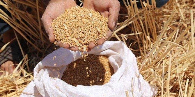 'Türkiye, buğdayda kurak seneler için hazırlık yapmalı'