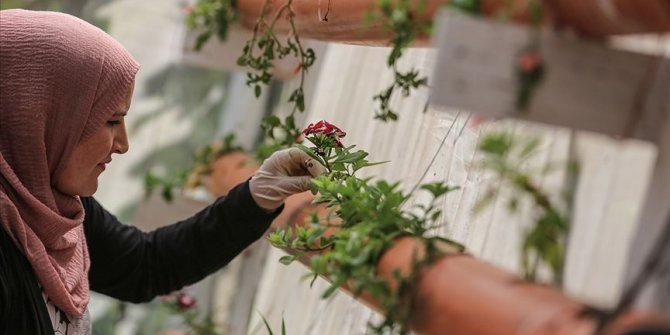 Gazze'de topraksız tarımda bir ilk gerçekleştirildi