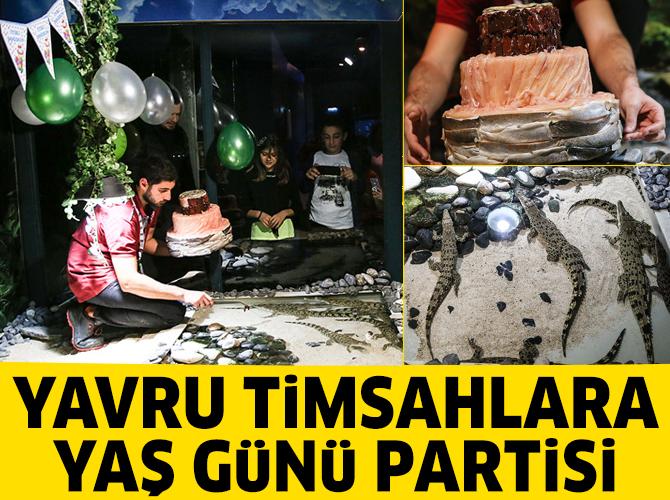 Yavru timsahlara yaş günü partisi