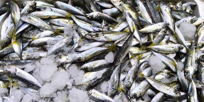 Ankaralılar 2 ayda 3 bin ton balık tüketti
