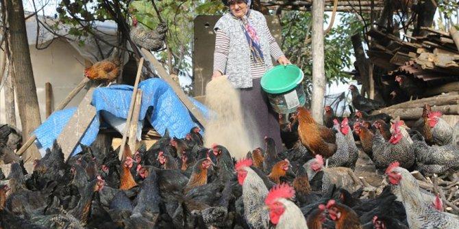 Eski buzdolabıyla başladıkları tavukçulukta yılda 200 bin lira kazanıyorlar