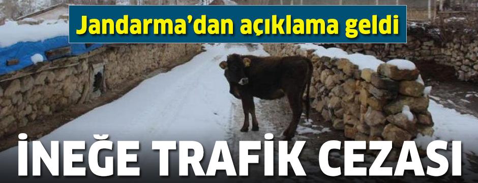 Jandarmadan başıboş gezen ineğe trafik cezası kesilmesine açıklama