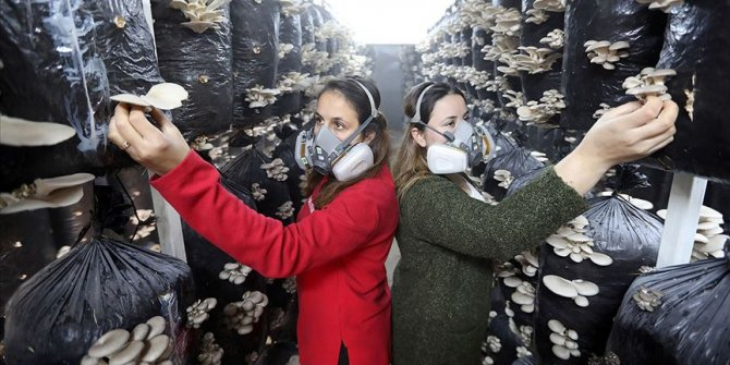 Aydınlı iki kız kardeş yılda 3 ton mantar yetiştirecek tesis kurdu