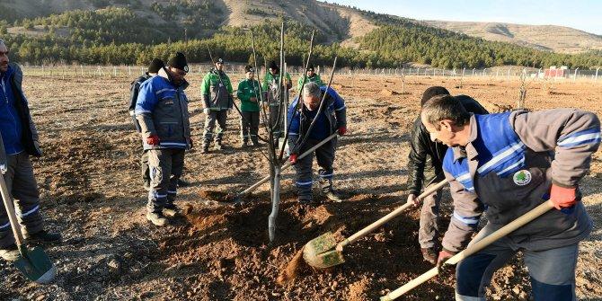 Mamak Ekoköy'de fidanlar toprakla buluştu