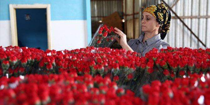 Çiçek sektörü ihracatta rekor kırdı