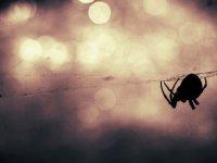 Yangın, toz fırtınası, dolu, selin vurduğu Avustralya'da 'zehirli örümcek' uyarısı