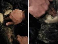 Soğukta kaskatı bulduğu köpeği, kalp masajı ile hayata döndürdü