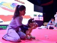 Büyükşehir Belediyesi'nden hayvanlarda ilk yardım eğitimi