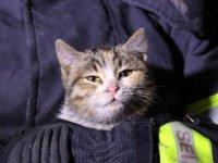 İtfaiye ekipleri yanan evden kediyi kurtardı