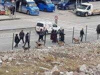 Bentderesi'nde sokak köpekleri, tedirgin ediyor