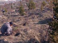 Keçiören'de ağaçlandırma çalışmaları devam ediyor