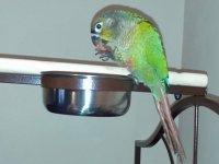 'Yangın' diye bağıran papağan aileyi yangından kurtardı
