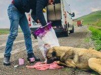 Cizreli servis şoförü maaşının bir bölümünü sokak hayvanlarına harcıyor