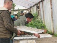 Beypazarı'nda çiçek ekimine başlandı
