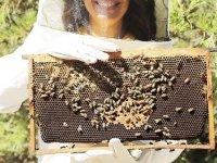 Koronavirüs arı ürünlerine yaradı, talepler yüzde 500 arttı