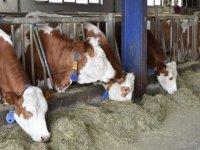 'Anadolu'nun hayvancılık ambarı' Doğu'da üretim de kalite de artırılacak