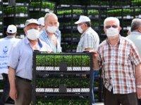 Kahramankazan'da 500 çiftçiye 1 milyon sebze fidesi