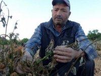 Mersin'de sıcaklık ani düştü, meyve bahçeleri zarar gördü
