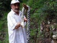 Karadeniz'de yılan tehlikesi