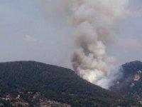 Milas'ta çıkan orman yangını, büyümeden kontrol altına alındı