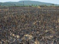 Tarihi Gelibolu Yarımadası'nın sakinleri 26 yıl önceki korkulu saatleri yeniden yaşadı