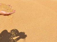 Güneydoğu'dan 6 ayda 1 milyar dolarlık hububat ve bakliyat ihracatı