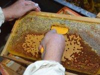 Afyonkarahisar'da doğal 'çiçek balı' sağımı heyecanı