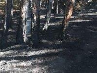 Soğuksu Milli Parkı'nda orman yangını
