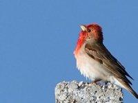 Yaban hayatı zengini Sarıkamış'ta 106 kuş türü tespit edildi