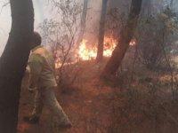 Kartal Aydos'ta ormanlık alanda yangın