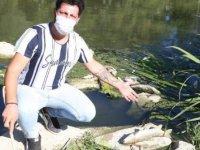 Yatağan Çayı'nda yüzlerce ölü balık kıyıya vurdu