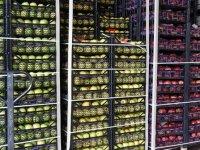 Tarım ürünleri ihracatı Kovid-19'a rağmen arttı
