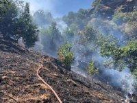 Beydağ'da 2 dekar ormanlık alan yandı