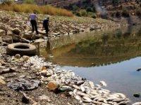 Kula Göleti'nde su çekildi, binlerce balık telef oldu