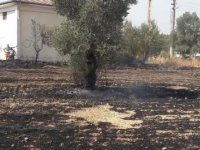 Bodrum'da çıkan yangında arı kovanları zarar gördü