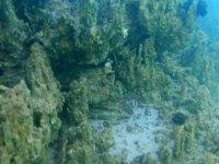 Van Gölü'nün derinliklerinde eski yerleşim yeri kalıntılarına rastlandı