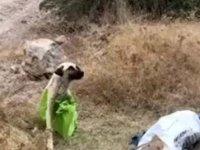Köpeği çuvala koyup, ağaçlık alana terk ettiler