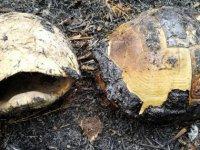 Bergama'da başlayıp İvrindi'ye sıçrayan yangında 100 hektar orman küle döndü