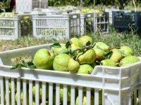 Meyvelerini bağışladı