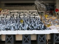 Karadeniz'de palumut bolluğu; fiyatı 10 liraya düştü