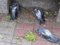 Kadıköy'de dolu nedeniyle kuşlar öldü